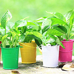 创意 礼品/【防雾霾绿植】办公室植物盆景 防辐射...