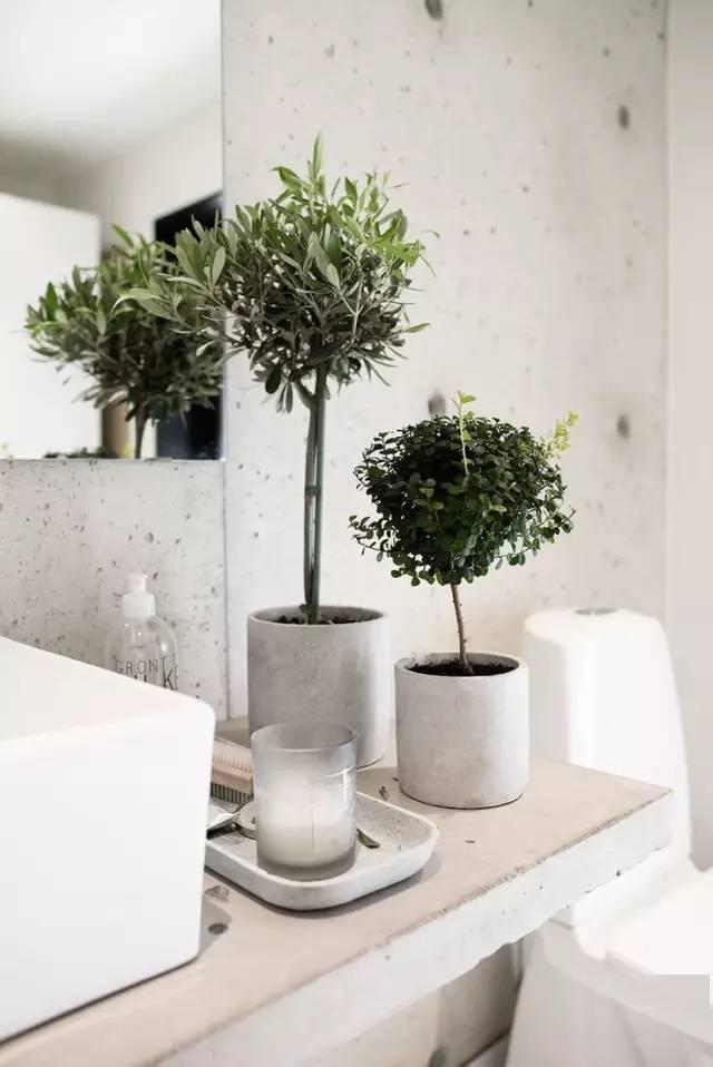 洗漱台绿植
